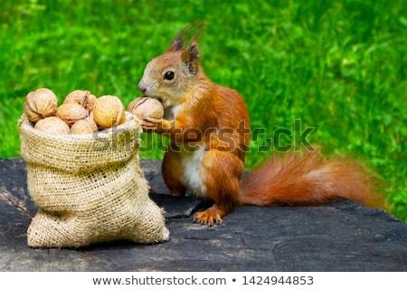 Aranyos mókus eszik kép fa magok Stock fotó © gregory21
