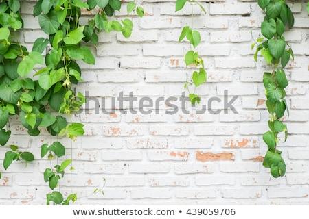 Velho fazenda verde plantas parede assento Foto stock © compuinfoto