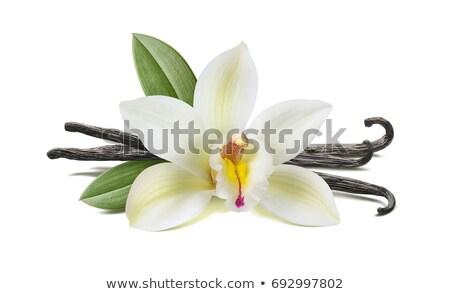 Vanília bab friss levelek fehér természet Stock fotó © joker