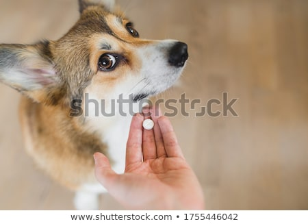 Hond pillen veeartsenijkundig witte ziek zorg Stockfoto © fantazista