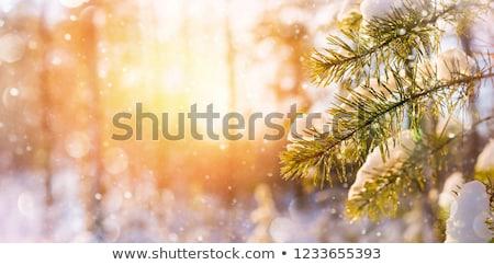 冷たい · 写真 · 冬 · 自然 · 水 - ストックフォト © icefront