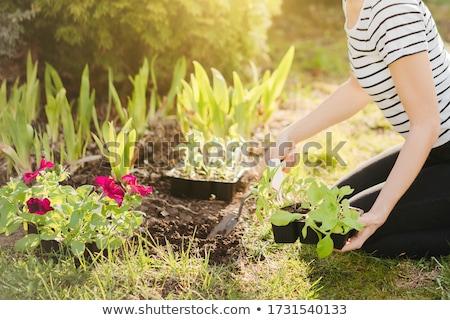 Vrouw zaailingen breed stro tuinieren Stockfoto © ozgur