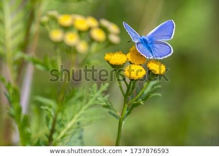 Foto stock: Azul · madeira · pôr · do · sol · fundo · verão · animal