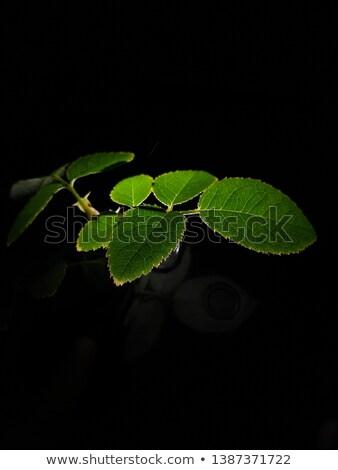 Textúra zöld búcsú fa tavasz fű Stock fotó © Elnur