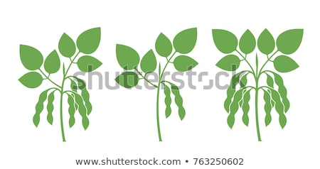 Ripe Soy Bean Plants and Beans Stock photo © stevanovicigor