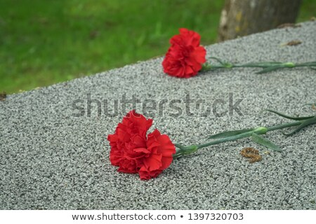 war cemetery plaque stock photo © devulderj