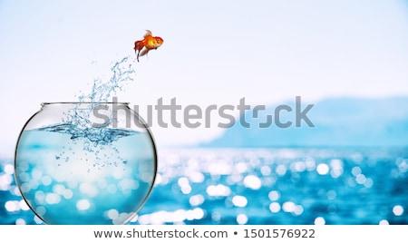 Akvaryum balığı atlama dışarı su kaçış cam Stok fotoğraf © Viva