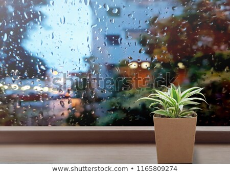 Green leaves on rainy window Stock photo © stevanovicigor