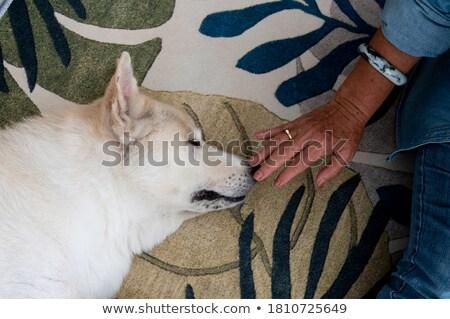 idős · hölgy · kutya · vicces · napozás · együtt - stock fotó © paha_l