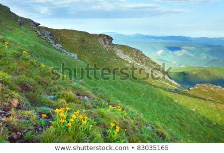 Rhododendron flowers on the slopes of the mountains in the morni Stock photo © Kotenko
