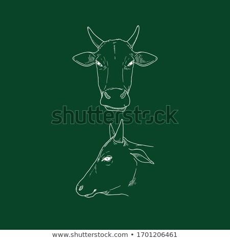 牛 · 頭 · チョーク · アイコン · 手描き - ストックフォト © rastudio