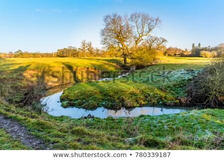 Rural landscape in winter in England Stock photo © dutourdumonde