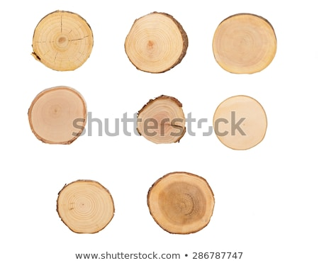 ash tree trunk cross section stock photo © stevanovicigor