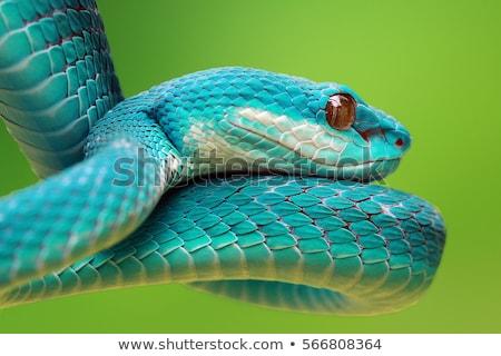 boos · slang · ontwerp · groene · schilderij · witte - stockfoto © bluering
