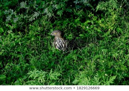 Wild snake behind the bush Stock photo © bluering