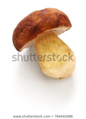 Comestibles champignons fraîches blanche personne Photo stock © Digifoodstock