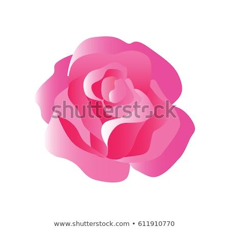 Tenro rosa flor equilibrado vermelho rosa Foto stock © Loud-Mango