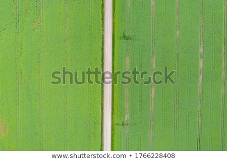 Drone point of view on cultivated wheat field Stock photo © stevanovicigor