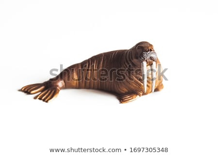 Walrus on white background Stock photo © bluering