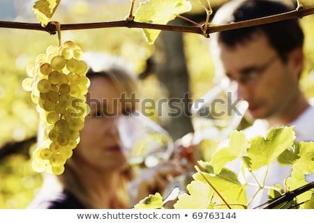 Feminino vidro vinho vinha campo fazenda Foto stock © wavebreak_media