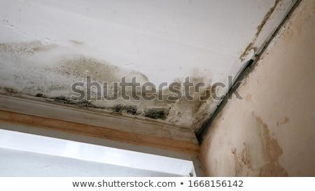 árvíz · ház · víz · piros · tető · folyó - stock fotó © devon