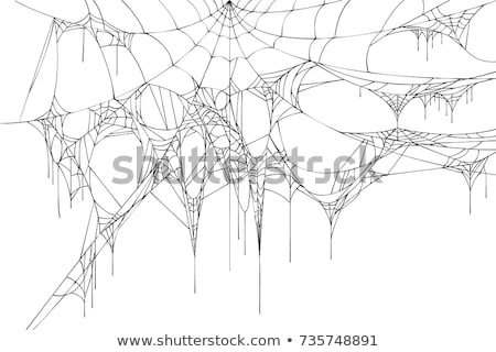 Scary black and white spider and torn web. Halloween symbols and accessories Stock photo © orensila