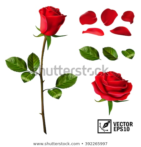 Stock photo: Bouquet of red roses isolated icon