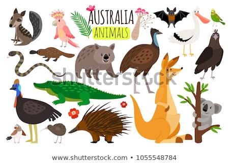 kangaroo isolated cartoon australia animal vector illustration stock photo © maryvalery