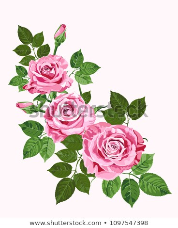 bright pink vector roses greeting card stock photo © tasipas