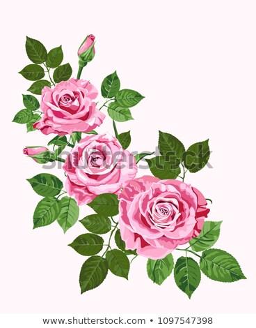 Stockfoto: Heldere · roze · vector · rozen · wenskaart · vintage