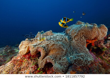 Marveling At The Marine Life  Stock photo © MilanMarkovic78