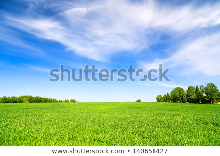 Beautiful rural lanscape with blue sky and white clouds, agricultural fields, meadows, green trees.  Stock photo © artjazz