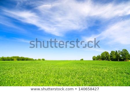 zöld · domb · búza · kék · ég · fű · nap - stock fotó © artjazz