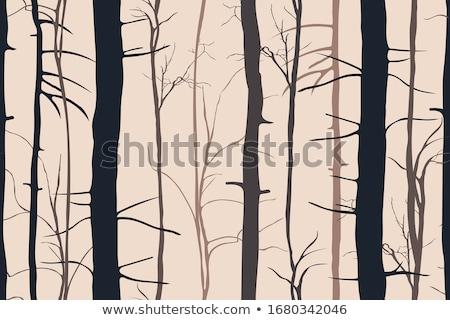 голый листьев поздно осень Сток-фото © orensila