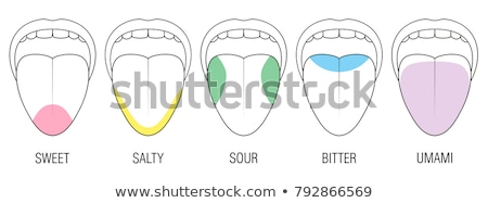 Sentido sabor salado ilustración como Foto stock © lenm