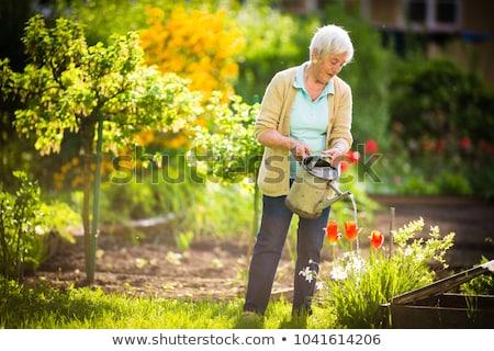 Starszy kobieta ogrodnictwo ogród roślin Zdjęcia stock © lightpoet