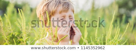 Boy sneezes because of an allergy to ragweed BANNER, long format Stock photo © galitskaya