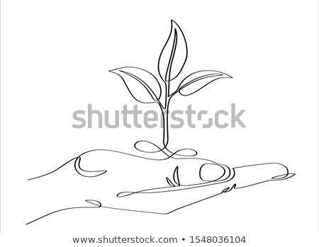 Strony drzewo sadzonka line ilustracja Zdjęcia stock © patrimonio