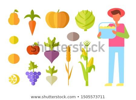 Insanlar üzüm buğday ayarlamak Stok fotoğraf © robuart