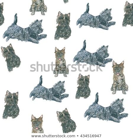 Cairn Terrier Dog Breed Cartoon Retro Drawing Stock photo © patrimonio