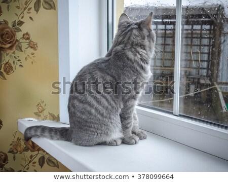 Kedi oturma pencere eşiği güzellik eğlence genç Stok fotoğraf © papa1266