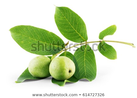 walnut isolated on green background  Stock photo © inaquim