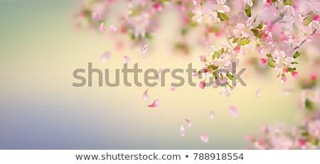 Sazonal fundos turva primavera Foto stock © jsnover