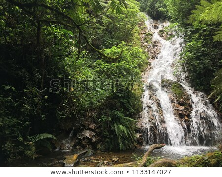 jungle vegetation in the Bwindi Impenetrable National Park Stock photo © prill