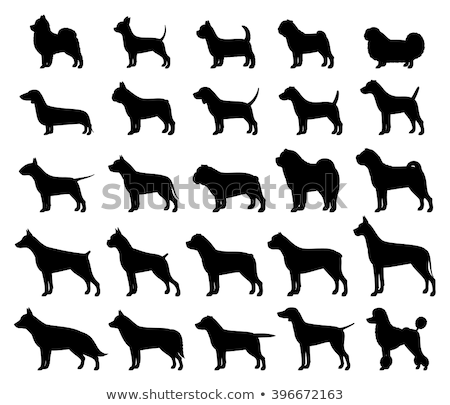 Jack Russel Terrier and Cane Corso Stock photo © kokimk