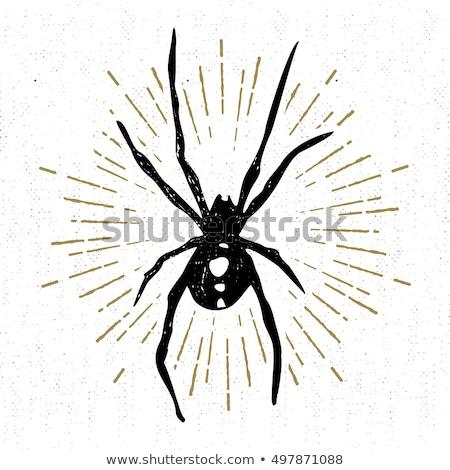 Stempel afbeelding zwarte weduwe papier bos Stockfoto © perysty