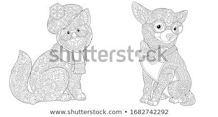 puppy and adult chihuahua stock photo © cynoclub