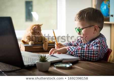 huisdier · afstuderen · Engels · bulldog · afgestudeerde - stockfoto © lightsource