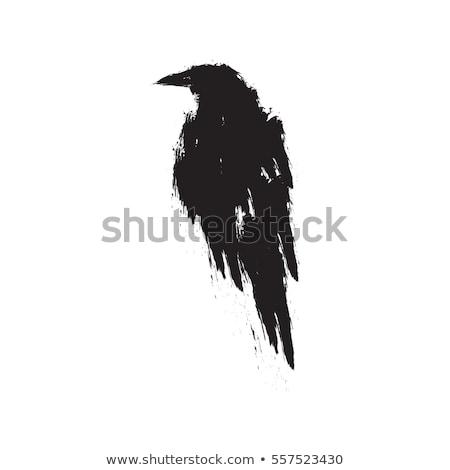 Esboço corvo vetor natureza projeto corporativo Foto stock © serdjo