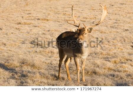 美しい 従事 野生動物 小さな 男性 バック ストックフォト © cboswell